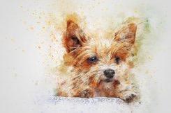 dog, animal, art