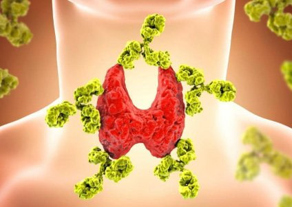 Do Goitrogenic Meals Negatively Affect Thyroid Significance Of Vitamin D In Thyroid Conditions