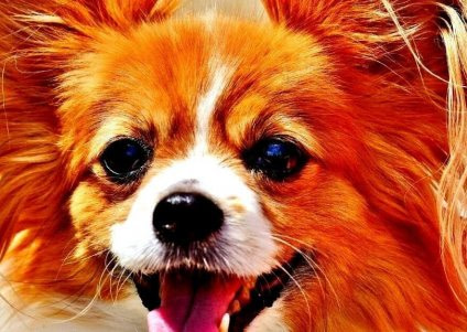 Older Dogs: Simple Truths And Tips Regarding Dogs And Golden Years